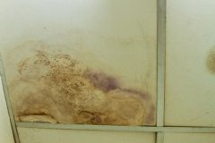 Water stains and mold on the ceiling